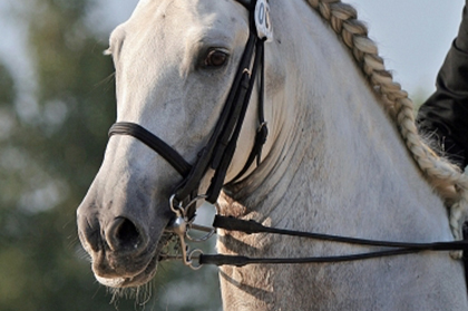 equestor 4