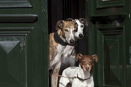 hundehotel 3