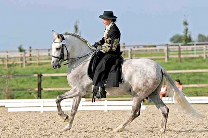 equestor