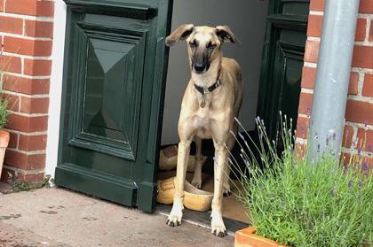 hundehotel 8