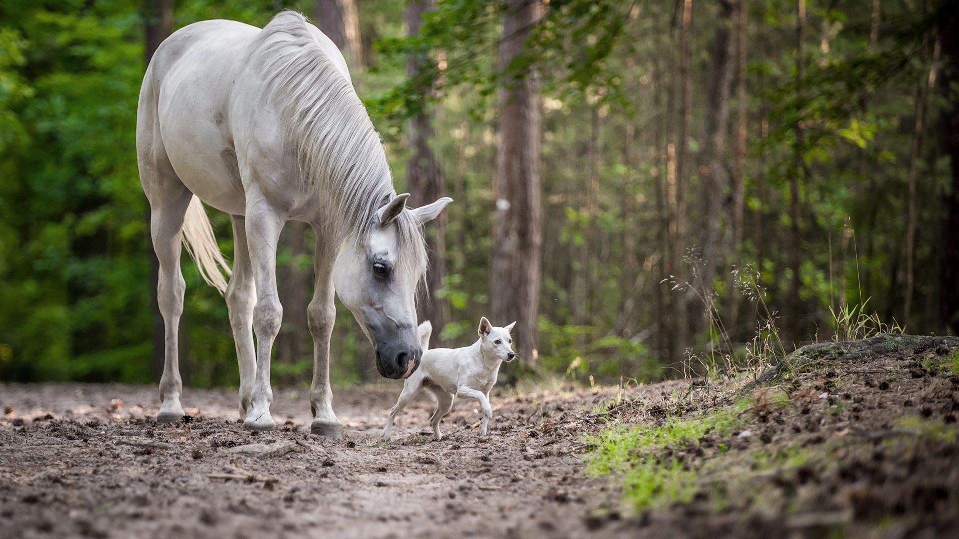 Wohlbefinden für Hund und Pferd